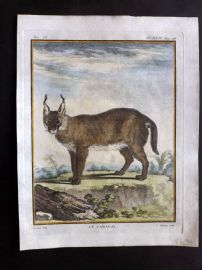 Buffon First Edition C1770 Antique Hand Col Print. Caracal 9-24